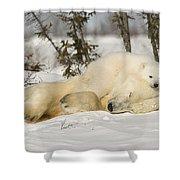 Polar Bear With Cub In Snow Shower Curtain