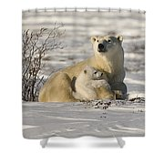 Polar Bear With Cub, Watchee Shower Curtain