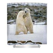 Polarbears, Churchill, Manitoba Shower Curtain