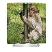 Pole Dancing Macaque Style Shower Curtain