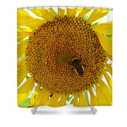 Pollen Hunter Shower Curtain