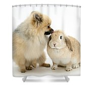 Pomeranian Dog And Rabbit Shower Curtain