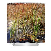 Pond And Rushes Shower Curtain