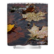 Pond Leaf Dew Drops Shower Curtain by LeeAnn McLaneGoetz McLaneGoetzStudioLLCcom