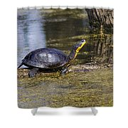 Pond Turtle Basking In The Sun Shower Curtain