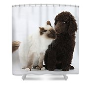 Poodle Pup And Cat Shower Curtain