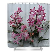Poor Hyacinth Shower Curtain