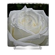 Pope's Rose Shower Curtain