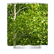 Poplar Tree And Leaves No.368 Shower Curtain