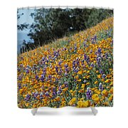 Poppies And Lupine Flowers Blanket Shower Curtain