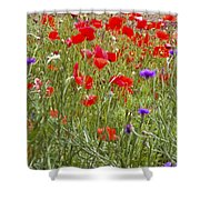 Poppies And Purple Flowers Shower Curtain