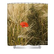 Poppies  In A Field Of Barley   Shower Curtain