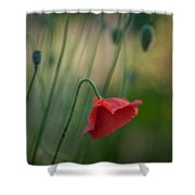 Poppies Mood Shower Curtain