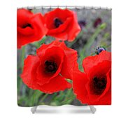 Poppies Of Stone Shower Curtain by Empty Wall