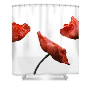 Poppies On White Shower Curtain