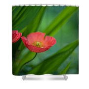 Poppies Vibrance Shower Curtain