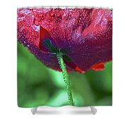 Poppy And Dewdrops Shower Curtain