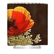 Poppy And Lace Shower Curtain