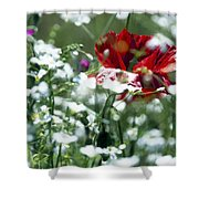 Poppy And White Flowers Shower Curtain