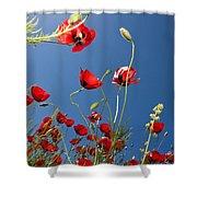 Poppy Field Shower Curtain by Ayhan Altun