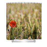 Poppy Flower In Field Of Wheat Shower Curtain