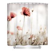 Poppy Flowers 15 Shower Curtain by Nailia Schwarz