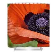 Poppy For Peace Shower Curtain