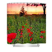 Poppy Patch And Previsualization Shower Curtain