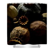 Poppy Pods Shower Curtain