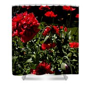 Poppy Pompom Shower Curtain