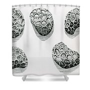 Poppy Seeds Engraving-1665 Shower Curtain