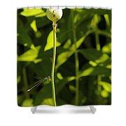 Poppyseed Bug Shower Curtain