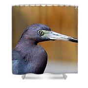 Portait Of A Little Blue Heron Shower Curtain