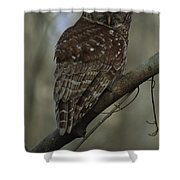 Portrait Of A Barred Owl Perched Shower Curtain