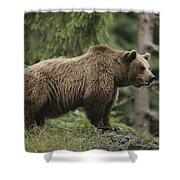 Portrait Of A Brown Bear Shower Curtain