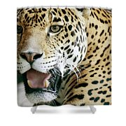 Portrait Of A Captive Jaguar Panthera Shower Curtain