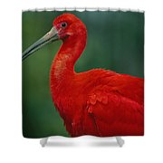 Portrait Of A Captive Scarlet Ibis Shower Curtain