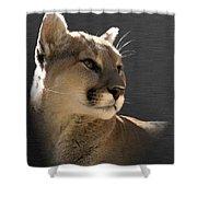 Portrait Of A Cat Shower Curtain