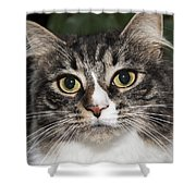 Portrait Of A Cat With Two Toned Eyes Shower Curtain