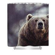 Portrait Of A Kodiak Brown Bear Shower Curtain
