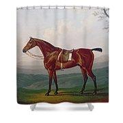 Portrait Of A Race Horse Shower Curtain by Daniel Clowes