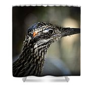 Portrait Of A Roadrunner  Shower Curtain