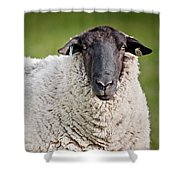 Portrait Of A Sheep Shower Curtain