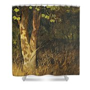 Portrait Of A Tree Trunk Shower Curtain