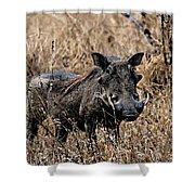 Portrait Of A Warthog Shower Curtain