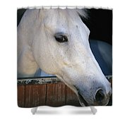 Portrait Of A White Horse Looking Shower Curtain