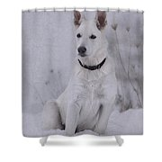 Portrait Of A Young Dog Shower Curtain