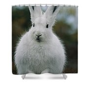 Portrait Of An Arctic Hare Shower Curtain