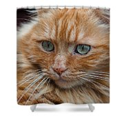 Portrait Of An Orange Kitty Shower Curtain