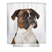 Portrait Of Boxer Dog On White Shower Curtain